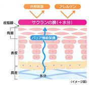 高保湿成分サクランが肌を保護